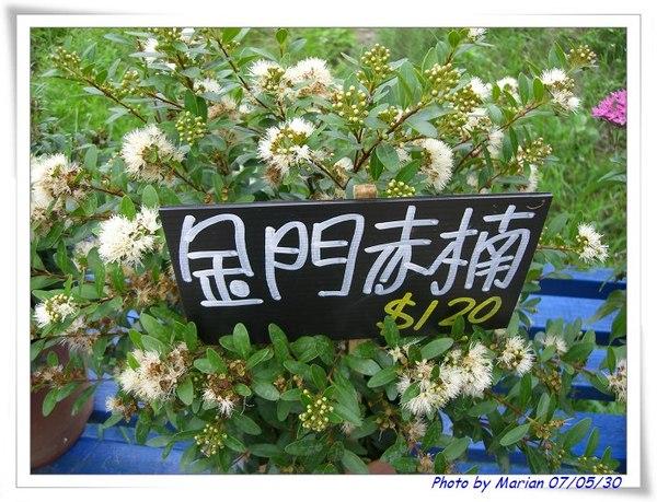 漂亮的花花