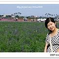 紫色鼠尾草