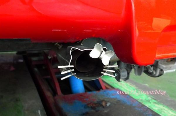 cats7.jpg