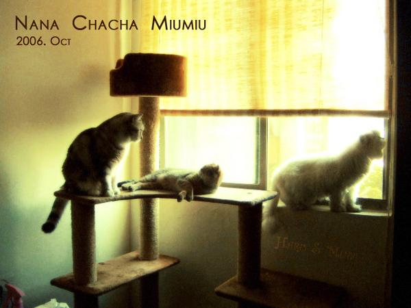 三隻貓的午後