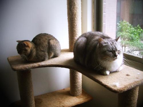 蠅量級與重量級的差異