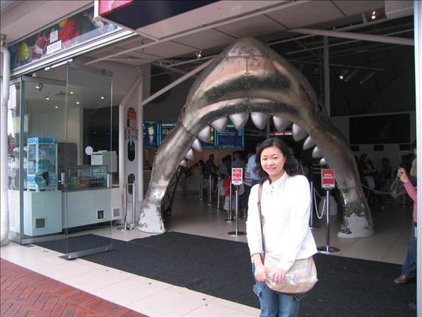 要進去海洋世界看鯊魚囉