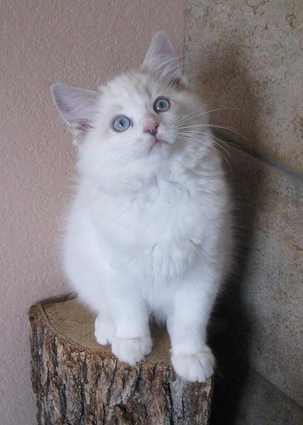 Mina 12 weeks.jpg
