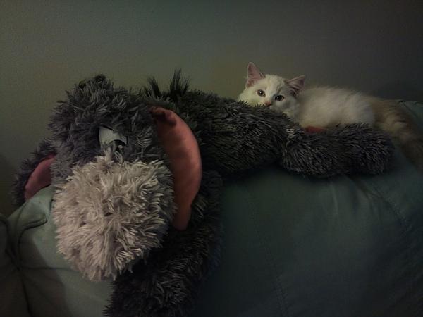Mina和小驢驢