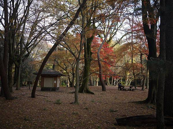 京都御所06