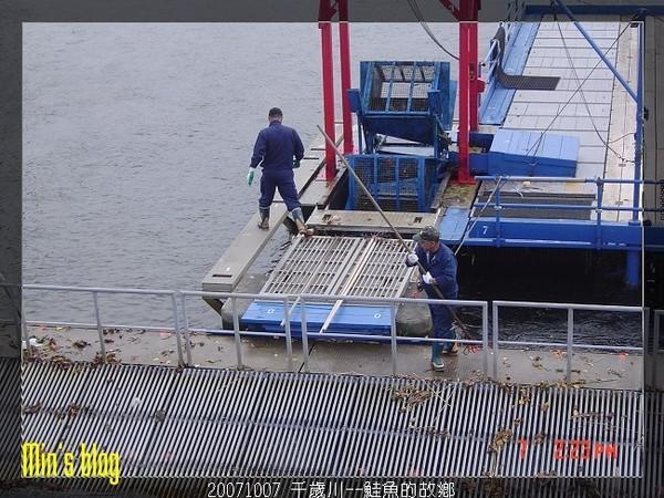 20071007 千歲川--鮭魚的故鄉
