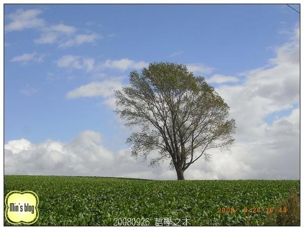 20080926 哲學之木