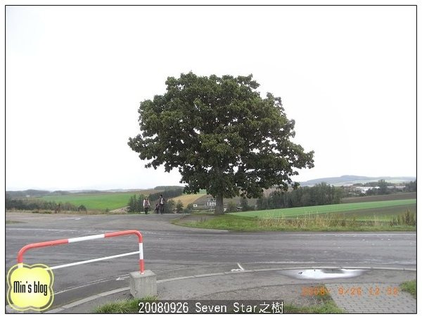 20080926 Seven Star之樹
