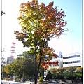 20080929 大通公園