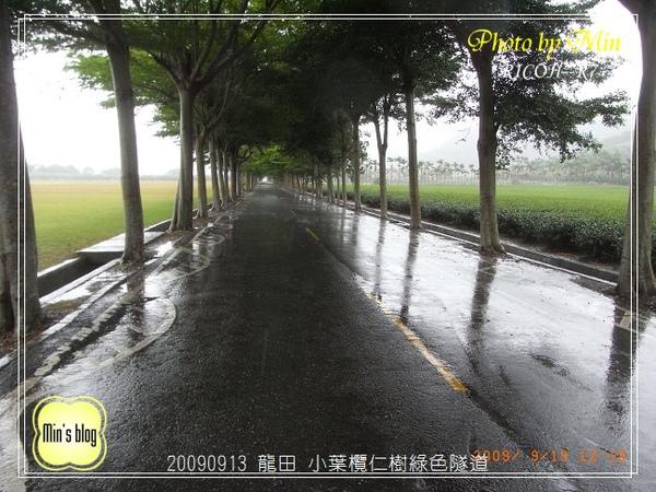 R0019130 小葉欖仁樹綠色隧道.JPG