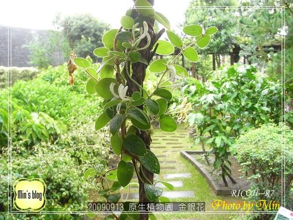 R0019151 原生植物園 金銀花.JPG