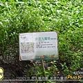 R0019164 原生植物園 紫莖九層塔.JPG