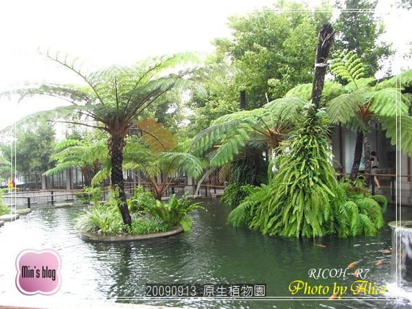 RIMG1000 原生植物園.JPG