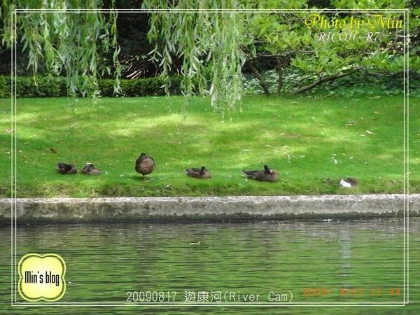 R0017547 遊康河(River Cam).JPG