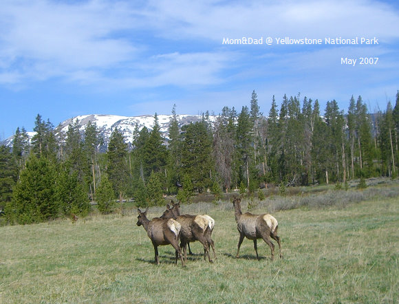 Yellowstone03.jpg