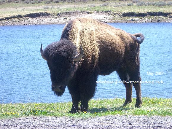 Yellowstone05.jpg
