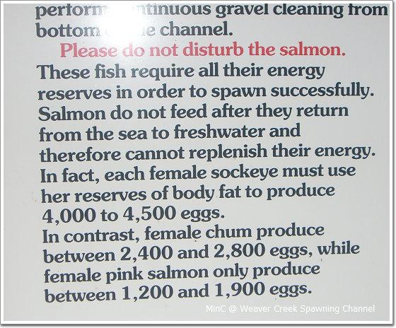 Salmon04.jpg