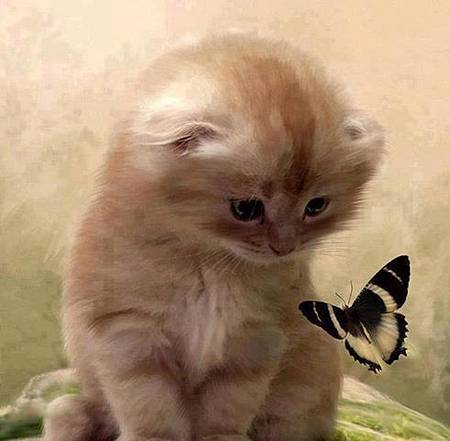 貓咪和蝴蝶-M.jpg