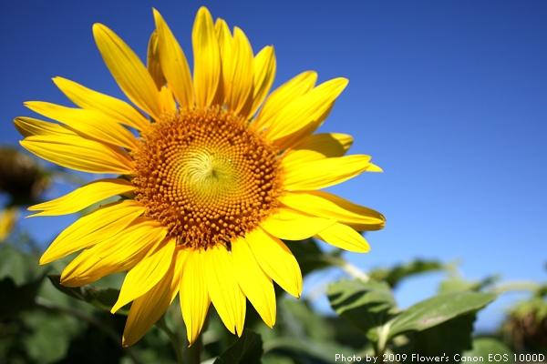 太陽花運動