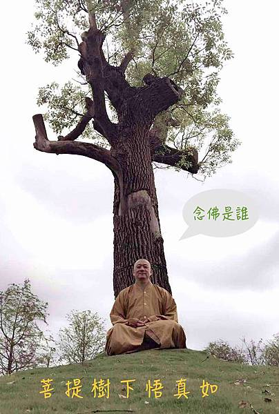 2-菩提樹下悟真如.jpg