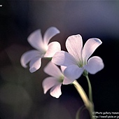 Flower 花.jpg