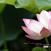 Lotus-46.jpg