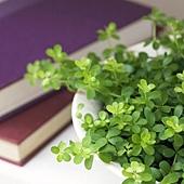 Book-Flower.jpg