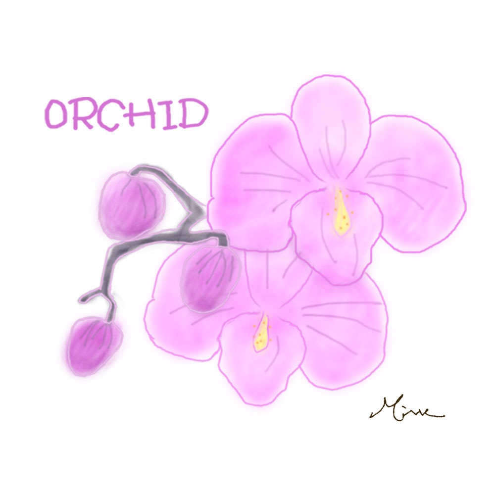 0311orchid
