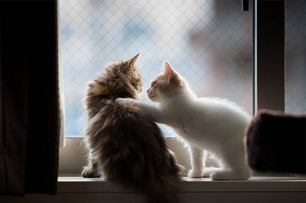 800x531xadaymag-30-melancholic-cats-waiting-for-their-humans-to-return-31-800x531.jpg.pagespeed.ic.KAe3g3rpZ5