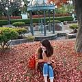 Akita_161102_1001.jpg