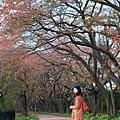 Akita_161102_1052.jpg