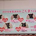 Kyushu_161108_072.jpg