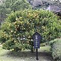 Kyushu_171217_023.jpg