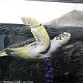 Kyushu_171220_0072.jpg