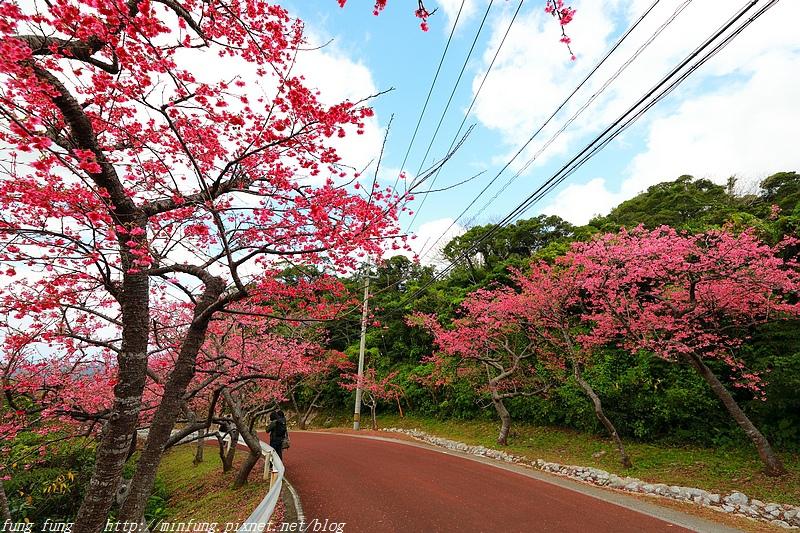 Okinawa_1801_0252.jpg