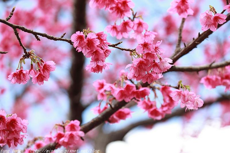 Okinawa_1801_0274.jpg