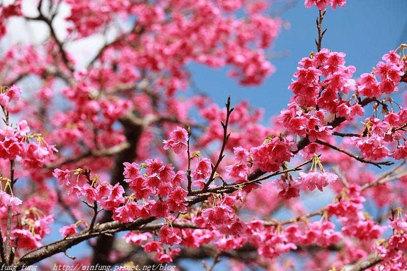 Okinawa_1801_0313.jpg