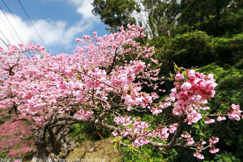 Okinawa_1801_0462.jpg