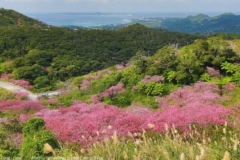 Okinawa_1801_0499.jpg