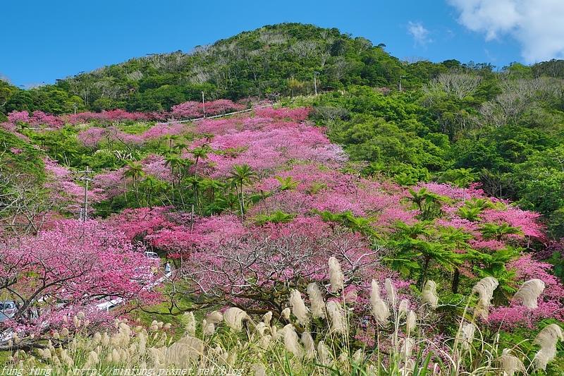 Okinawa_1801_0552.jpg