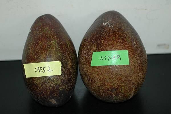 caes 2與ws7-3D1果實表面比較AABZ.JPG