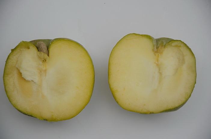 中埔果園白柿品種沖繩引進疑cuccio果實剖面調整DSC_5826