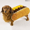 Halloween -cats and dogs (1).jpg