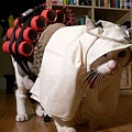 Halloween -cats and dogs (10).jpg