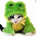 Halloween -cats and dogs (16).jpg