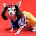 Halloween -cats and dogs (15).jpg