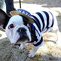 Halloween -cats and dogs (13).jpg