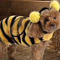 Halloween -cats and dogs (19).jpg