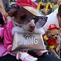 Halloween -cats and dogs (17).jpg