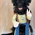 Halloween -cats and dogs (2).jpg